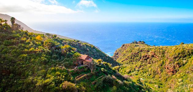 Nace Olipalma para impulsar el cultivo del olivo en la isla de La Palma
