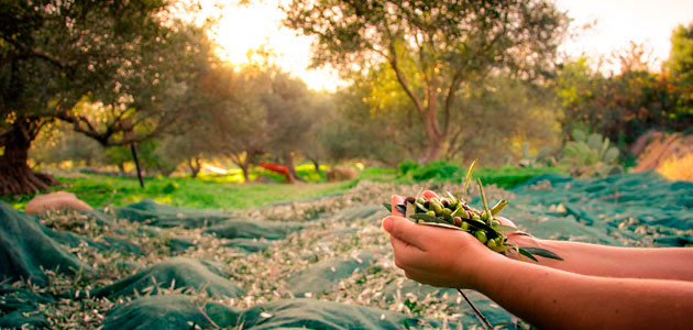 Seralma-Verde, un nuevo servicio para el aprovechamiento de los subproductos del olivar