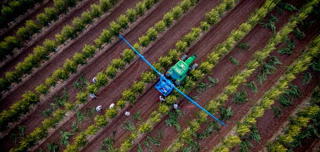 Life Resilience gestiona de manera eficiente las hectáreas de olivar con riego deficitario controlado