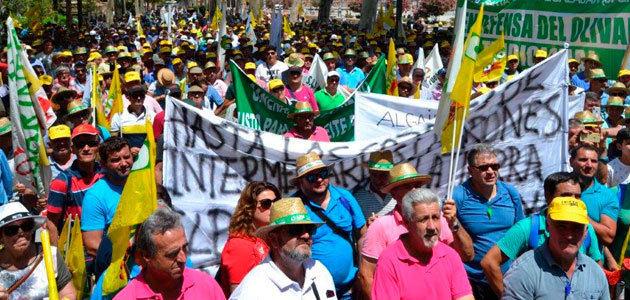 COAG y UPA se manifestarán en Madrid por los bajos precios del aceite de oliva