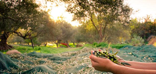 Previsiones de la CE para 2030: crecerá la producción, el consumo y las exportaciones de aceite de oliva