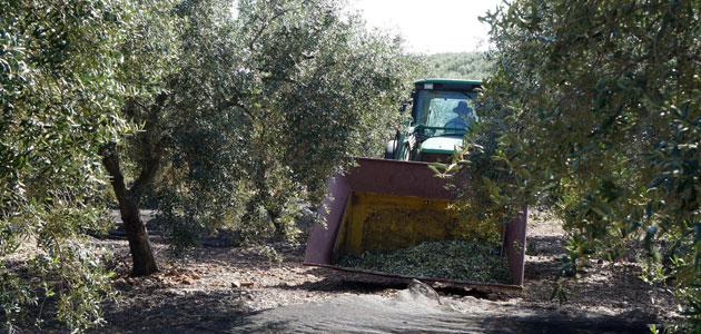 Cooperativas asegura que la falta de mano de obra deja sin recoger parte de la cosecha en la sierra cordobesa