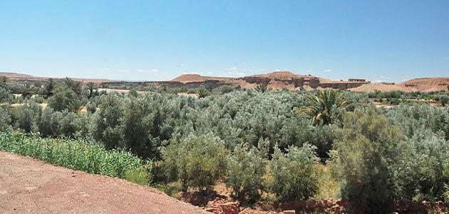 Acuerdo para impulsar el sector oleícola en Marruecos