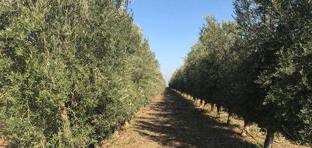 Finalizan las masterclass internacionales del Máster de Empresas Oleícolas con un análisis de Alemania, Argentina y Chile