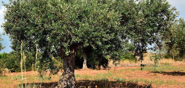 Andalucía amplía el plazo de solicitud de las ayudas para modernizar explotaciones agrarias