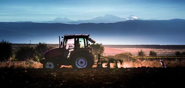 Andalucía destina 20 millones de euros a la modernización de las explotaciones olivareras