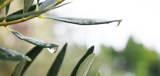 El Gobierno reduce el módulo del IRPF para el olivar