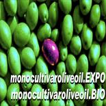 El aceite de oliva virgen extra español triunfa con 14 Medallas de Oro en el concurso Monocultivar Olive Oil Expo de Milán