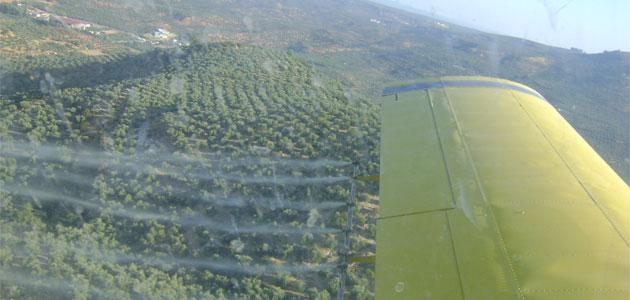 La DOP Sierra de Segura inicia los tratamientos aéreos contra la mosca del olivo