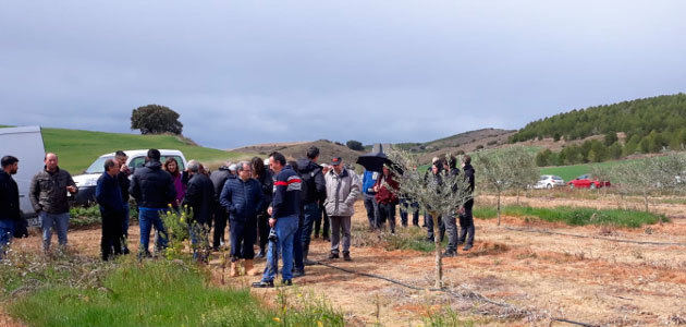 Profesionales agrícolas aprenden técnicas de gestión de malas hierbas en el olivar