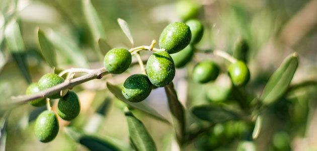 Novaterra: nuevas estrategias para reducir el impacto negativo de los pesticidas en los olivos del Mediterráneo