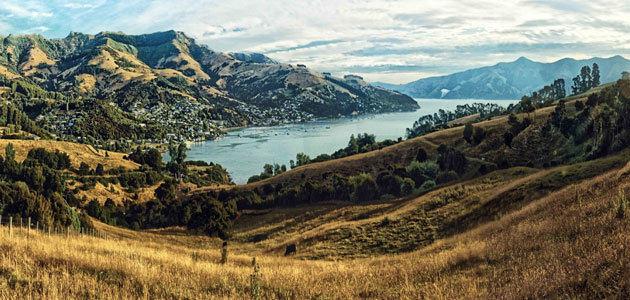 El aceite de oliva se populariza en Nueva Zelanda