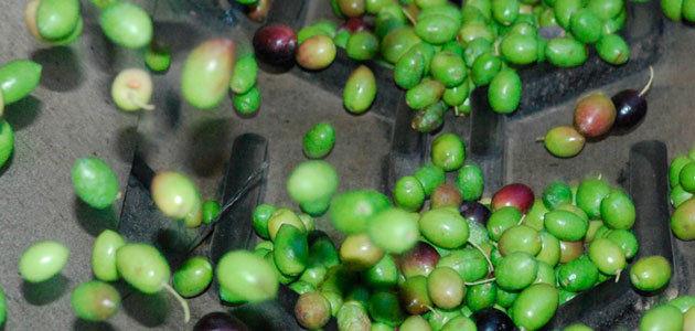 Oilquality: clasificación de los aceites de oliva en tiempo real previamente a su almacenamiento