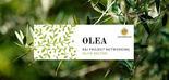 Más de 200 profesionales participan en el III OLEA Internacional Networking Event
