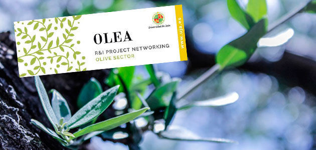 OLEA Initiative, una iniciativa para impulsar proyectos de I+D a nivel internacional en el sector oleícola