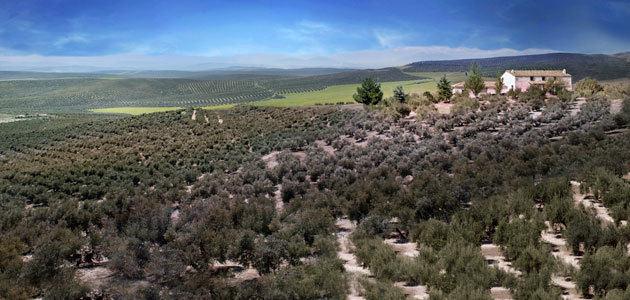 El oleoturismo como herramienta para hacer más sostenible el olivar en las comarcas de Jaén