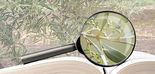 A vueltas con la confusión del consumidor y las denominaciones de los aceites de oliva