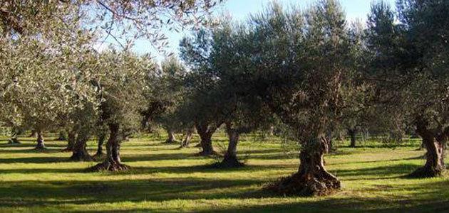 El VI Simposio de Producción Agraria Ecológica de Reus se dedicará al olivo y a los frutos secos