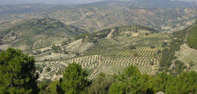 La Diputación de Jaén valora en el pleno integrarse en la Asociación de los Paisajes del Olivar de Andalucía Patrimonio Mundial