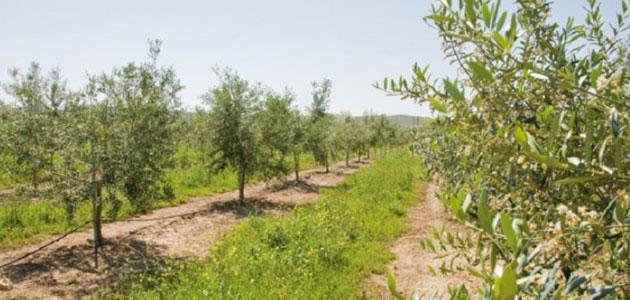 Andalucía convoca los Premios de Medio Ambiente 2021