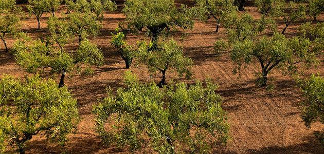 Nuevo proyecto sobre agricultura de precisión en olivar y almendro de secano