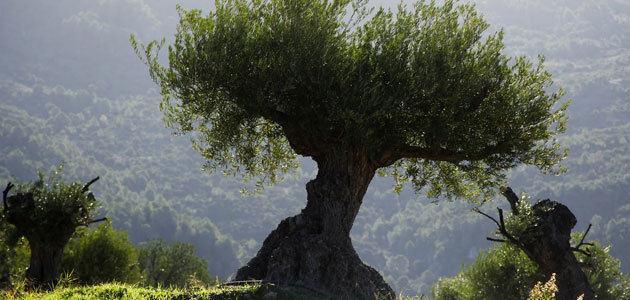 La CE publica una lista de posibles regímenes ecológicos