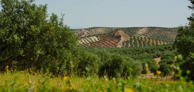 Día Internacional de la Madre Tierra: el olivar como garantía de biodiversidad