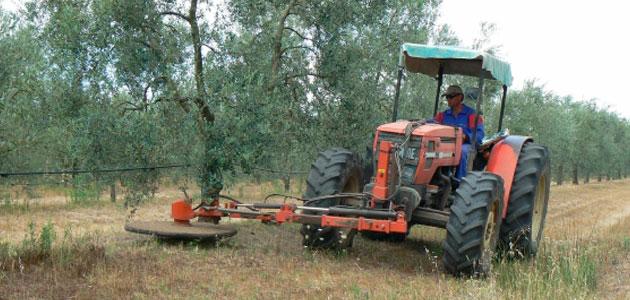 Andalucía abona ayudas por 10 millones que respaldan sistemas sostenibles de olivar