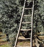 Nueva propuesta de Bruselas para reforzar las normas sobre agricultura ecológica