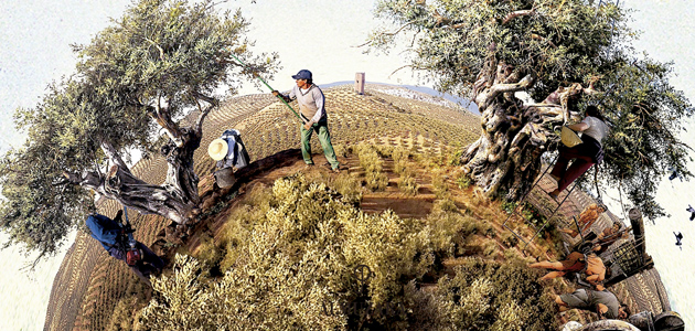Olivares de España, un recorrido por la biografía del olivar español, su memoria y sus paisajes