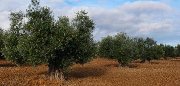 La Comunidad de Madrid financiará hasta el 30% del seguro agrario