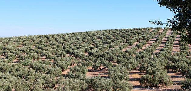 La PAC post 2020 y la oleicultura jiennense