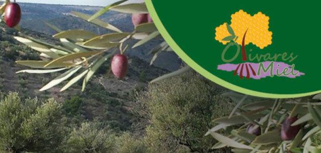 Olivares de miel, en busca de una alternativa sostenible a los olivares tradicionales madrileños