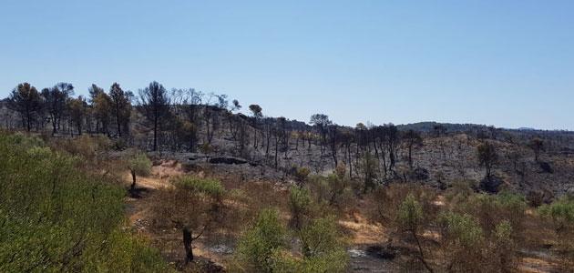 Las cooperativas catalanas confirman que el incendio de Tarragona arrasó alrededor de 800 ha. de olivar