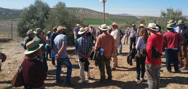 Más de 350 olivareros interesados en formar parte de Olivares Vivos