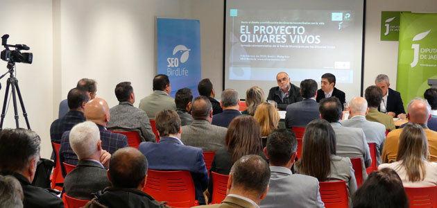 El encuentro de la Red de Municipios por los Olivares Vivos reúne a más de 60 ayuntamientos