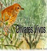 Olivares Vivos, un proyecto para la certificación de olivares reconciliados con la biodiversidad