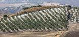 La tierra cultivada en España es insuficiente para abastecer el consumo del país, a excepción del olivar