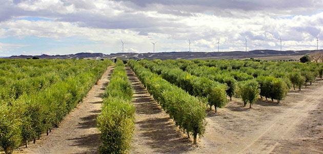 Olivaria, una sorprendente y novedosa ruta de oleoturismo en Aragón