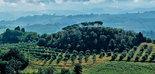 2018, 'annus terribilis' para el sector oleícola italiano