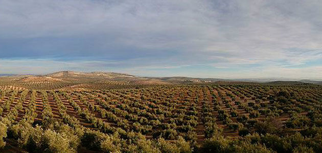 El MAPA constata la tendencia ascendente de la comercialización de aceite de oliva desde el mes de marzo