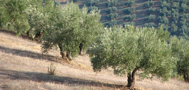 Andalucía gestionará más de 103 millones en ayudas para potenciar la sostenibilidad y conservar la biodiversidad
