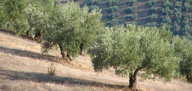 Andalucía destina 16,4 millones a explotaciones con limitaciones derivadas de su ubicación