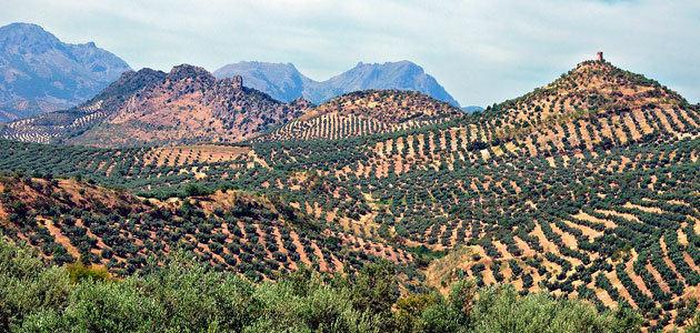 Andalucía continúa con el pago de ayudas a los seguros agrarios y abona 2 millones de euros