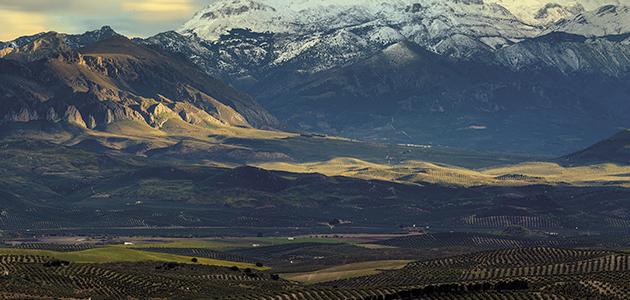 El olivar tradicional en peligro de extinción: ¿Cómo podemos evitar una tragedia?