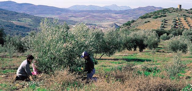 Jaén pide ayudas a la Junta de Andalucía para ejecutar cuatro proyectos que hagan más rentable el sector oleícola