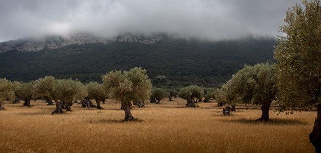 El precio de la tierra de olivar subió un 2,1% en 2018