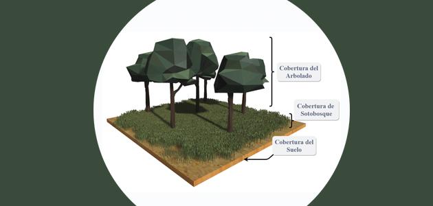 Desarrollan una técnica 3D que distingue el estado de salud de los olivos con imágenes de satélite