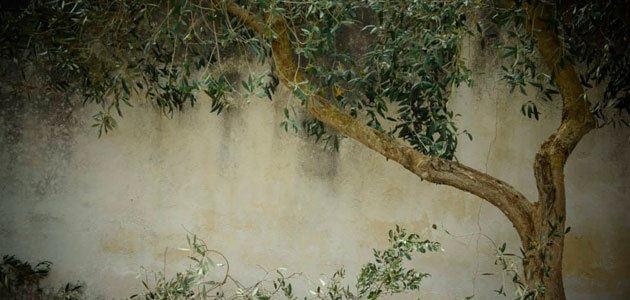 El COI eleva su previsión sobre la producción mundial de aceite de oliva hasta 3.131.000 t.