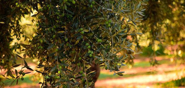 El Ifapa persigue potenciar el carácter ambiental de la agricultura como sumidero de CO2